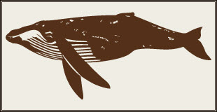 whale_or_wale